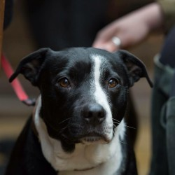 Missy finds her forever home